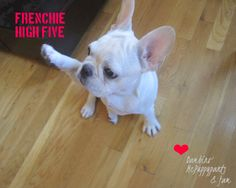 Frenchie cuteness.