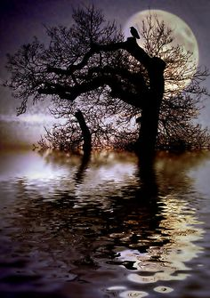 Old tree, water, and the moon. Moon Pictures, Pretty Pictures, Cool Photos, Moon Pics, Shoot The Moon, Beautiful Moon, Belle Photo, Night Skies, Beautiful Landscapes