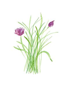Chives, original watercolor painting, herb, botanical, green, plant, fresh kitchen decor. $42.00, via Etsy.