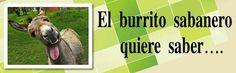 BURRADAS IMPUNES Y CORRUPTAS