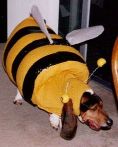 I think Huck needs to be a bumbleBEES for Halloween next year... @Courtneylaynem