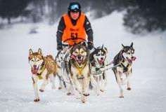 RUNNNN!  Snow Dogs by friedrich schütz on 500px