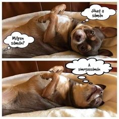 Funny Memes, Jokes, Float Your Boat, Really Funny, I Love Dogs, Picture Video, Haha, Funny Pictures, Cute