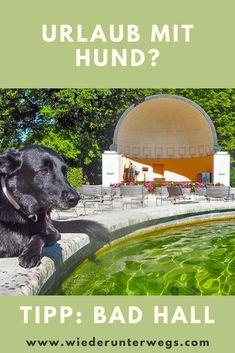 In der Landesvilla im wunderschönen Original Jugendstil - Wohnen mit Hund zur Kur oder Urlaub