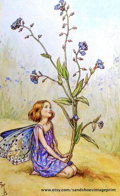 Dies ist eine reizvolle zweiseitiges Druck von zwei schöne Blume Feen des frühen 20. Jahrhunderts Künstlers, Cicely Mary Barker! Dies ist ein Faksimile Druck (kein Scan) aus einer Sammlung der 1970er Jahre-Barker Arbeit. Es zeigt die Vergissmeinnicht-Fee - eine süße Figur auf