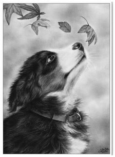 Latest Snap Shots bernese mountain dogs drawing Suggestions For over many years, the Bernese Huge batch Doggy is a huge foundation regarding village lifetime with Switzerlan Animal Sketches, Animal Drawings, Art Drawings, Puppy Drawings, Dog Sketches, Amazing Drawings, Realistic Drawings, Animal Coloring Pages, Colouring Pages