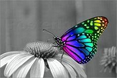 Poster / Leinwandbild Künstlerischer Schmetterling - Wonderful Dream Picture