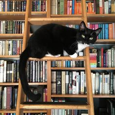 Books ~ Cats | In charge of the library ladder