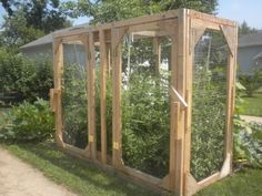 Cage for tomato plant to keep out the squirrels - great idea and attractive!