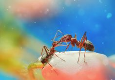 Dreamlike Photographs of Insects Found in a Garden