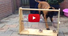 He Built The GREATEST Toy For His Dog! Wow, What An Awesome Idea! totally building this for ginger when I get home! :)