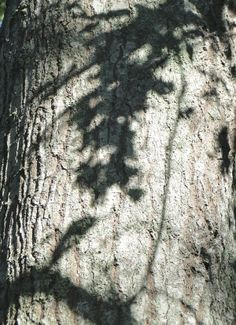 Shadows on a tree trunk  #photography