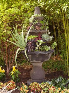 Old fountain planter filled with succulents