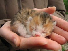 Beautiful sleeping kitten
