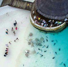 Le Maldive qusnte cose si possono vedere!