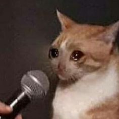 Today's Morning Mega Memes Sad Cat Meme, Cute Cat Memes, Funny Animal Memes, Funny Animal Pictures, Funny Cats, Funny Animals, Funny Memes, Meme Meme, Top Memes