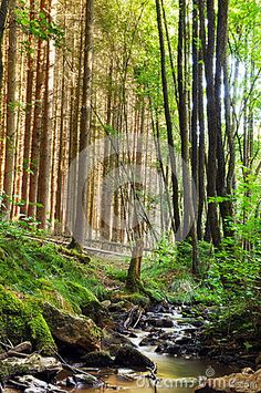Download Creek In A Forest Royalty Free Stock Photo for free or as low as $0.20USD. New users enjoy 60% OFF. 20,622,026 high-resolution stock photos and vector illustrations. Image: 25866715