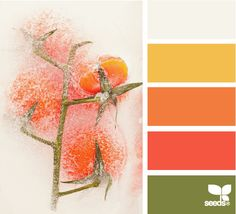 Iced Tomato: Bright Crisp White, Sunshine Yellow, Coral, Watermelon Pink and Olive Green