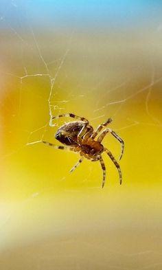 Macro Spider by Allan Chantrell, via 500px