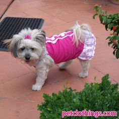 Magenta Dog Dress with 3 Buttons