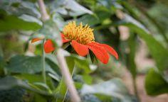 UnParSinRumbo Decidimos explorar calles y lugares y vimos detalles como esta pequeña flor