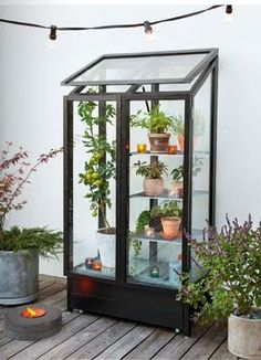 indoor greenhouse for year-round growing.