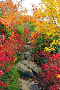 Hiking Trail in the Blue Ridge Mountains of North Carolina, USA