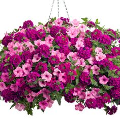 The Hit It Big flower combination uses two best sellers for an attractive color combination with big impact.
