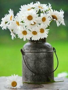 Daisies arranged in an old milk jug.