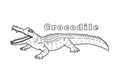 Crocodiles With Open Mouth Wide