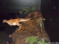 """洞穴掘奔龙(Oryctodromeuscubicularis),属名词源来自希腊文""""orycto""""和""""dromeus""""的组合,意为""""会挖掘的奔跑者"""",种名""""cubicularis""""意为""""巢穴"""",指掘奔龙穴居生活的方式。"""