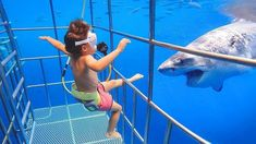 TRY NOT TO LAUGH CHALLENGE #1- Baby Shark Doo Doo - YouTube Funny Animal Videos, Videos Funny, Funny Animals, Baby Animals, Funny Pets, Video Baby Shark, Shark Cage, Baby Shark Doo Doo, Shark Diving