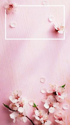 Wallpaper sakuras