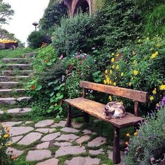 Pickles, the Cat who lives in Hobbiton, New Zealand
