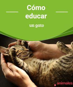 Cómo educar un gato -Mejor con Mascotas  Los gatos pueden ser complejos, así que te damos algunos consejos sobre cómo educar un gato.