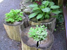 Tree Stump Planters.. rustic and woodsy.