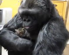6 animals with pets of their own | MNN - Mother Nature Network