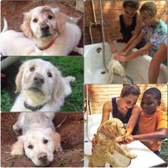 Puppies got dirty having fun & the campers at Lionheart's Summer Farm Camp had fun getting them clean!