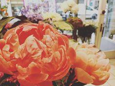Quelques Photos, Boutique, Rose, Plants, Flowers, Pink, Plant, Roses, Boutiques
