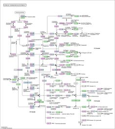 Steroid hormone biosynthesis with drugs and diseases from Kegg.