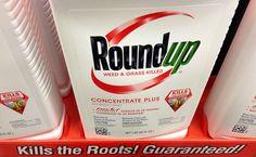 Judge Blocks Monsanto's Bid To Stop California From Listing Glyphosate As Carcinogenic   Care2 Causes