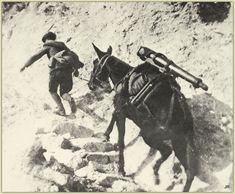 Das Vertrauen und die Treue von Tieren zu Menschen machten sich diese schon immer in Kriegen zu Nutze. Dieses Maultier geht den gefährlichen Steig in die Berge ohne zu zögern. Ein ergreifendes Zeitdokument mit ungewissem Ausgang.