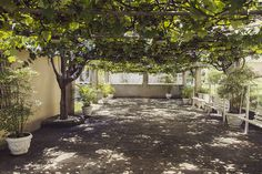 Rodrigo Ladeira - Casa Aberta. Para formar essa parreira, existem 04 pês de uva.