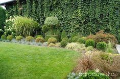 Metamorfozy ogrodowe - strona 150 - Forum ogrodnicze - Ogrodowisko