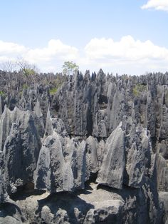Madagascar Tsingy - tsingy tsingy in malagasy means to go on tip toes and that is needed in the National Park that bears this name (c) Apes Ma