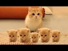 Watch So Many Cute Kittens Videos Compilation, Funny Kittens Video. Checkout these collection of cute kittens and their nasty things video. You may never seen this type of cute kittens collection. Watch and enjoy So Many Cute Kittens Videos Compilation. Cute Kittens, Cute Little Kittens, Cute Baby Cats, Cute Kitten Gif, Cute Baby Animals, Funny Animals, Funny Cats, Fun Funny, Beautiful Kittens