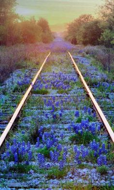 "railroad tracks gently being taken back by nature. beautiful "" railroad tracks gently being taken back by nature. Beautiful World, Beautiful Places, Texas Bluebonnets, All Nature, Foto Art, Blue Bonnets, Train Tracks, Abandoned Places, Abandoned Castles"