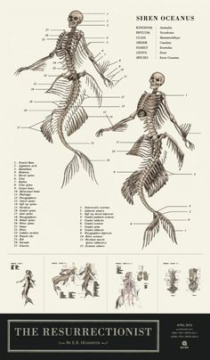 Mythological creatures are cooler when they're anatomically correct