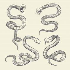 Hand drawing snake set wildlife snakes tattoo vector image on VectorStock Snake Sketch, Snake Drawing, Snake Art, Tattoo P, Snake Tattoo, How To Tattoo, Snake Outline, Dibujos Tattoo, Tattoo Design Drawings