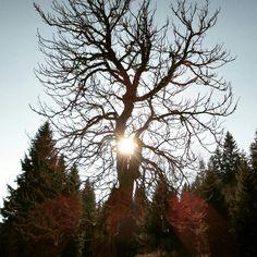 #Moje #ulubione #drzewo w Batorowie #gory #stolowe - #my #favorite #tree ar #batorów - #natura #nature #przyroda #dolnoslaskie #dolny #slask #polska #poland #lubiepolske #ziemiaklodzka